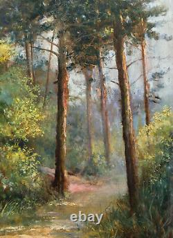 Ancient Painting Hsp Path In Sunny Pine Forest